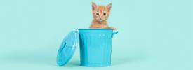 青いゴミ箱の中にいるかわいい猫